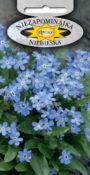 Niezapominajka alpejska - Niebieska