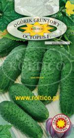 Ogórek gruntowy Octopus - mieszaniec F1