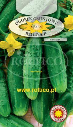 Ogórek gruntowy Regina – mieszaniec F1