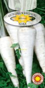 Pietruszka korzeniowa Alba