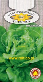 Sałata Attraction (Atrakcja)
