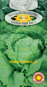 Sałata Kr. Lodowa Laibacher Eis 2
