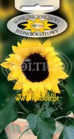 Słonecznik doniczkowy - Jednokwiatowy
