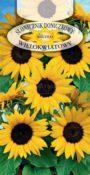 Słonecznik doniczkowy - Wielokwiatowy