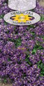 Smagliczka nadmorska - Fioletowa