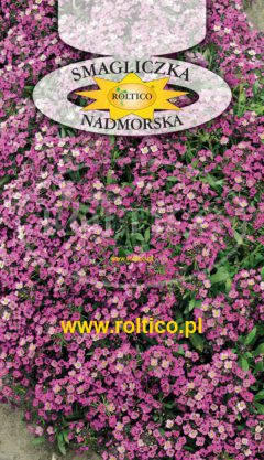 Smagliczka nadmorska – Różowa