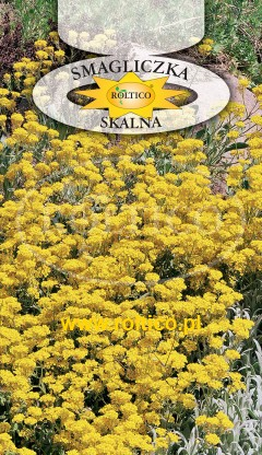Smagliczka skalna - żółta