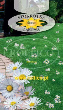 Stokrotka łąkowa – Do ozdoby trawników