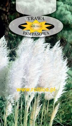 Trawa pampasowa - Biała