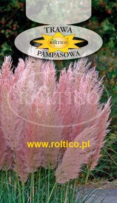 Trawa pampasowa  - Różowa
