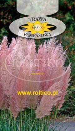 Trawa pampasowa  – Różowa