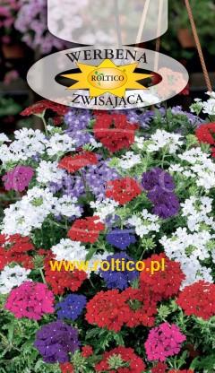Werbena ogrodowa - Mieszanka zwisająca