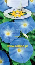 Wilec, Powój pnący - Niebieski