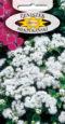 Żeniszek meksykański - Biały
