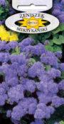 Żeniszek meksykański - Niebieski
