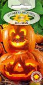 Dynia olbrzymia Big Max