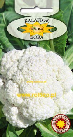 Kalafior Bora