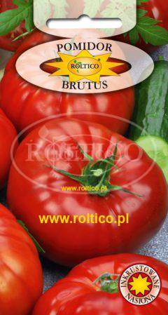Pomidor gruntowy Brutus