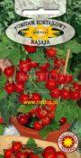 Pomidor koktajlowy (balkonowy) Bajaja