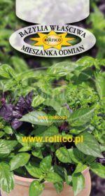Bazylia właściwa - mieszanka odmian