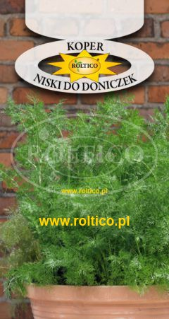 Koper ogrodowy – Niski do doniczek