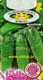 Ogórek gruntowy Borus - mieszaniec F1