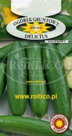 Ogórek gruntowy sałatkowy Delicius
