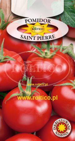 Pomidor gruntowy Saint Pierre
