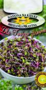 Nasiona na kiełki - Mieszanka Pikantna