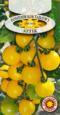 Pomidor Koktajlowy Aztek