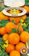 Pomidor Koktajlowy Venus
