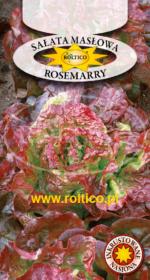 Sałata Masłowa Rosemarry