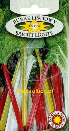 Burak liściowy Bright Lights
