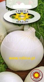 Cebula Avalon (biała)