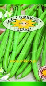 Fasola szparagowa (zielona) Ferrari