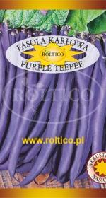 Fasola karłowa Purple Teepee