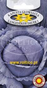 Kapusta głowiasta czerwona Langedijker Dauer 3