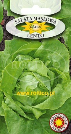 Sałata masłowa Lento
