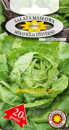 Sałata masłowa Meraviglia D'Inverno – zimująca