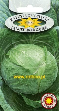 Kapusta głowiasta biała Langedijker Dauer